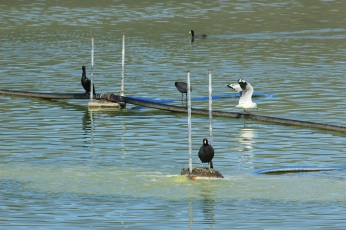 Aves que aún viven en la laguna (Foto Chaski Klandestinx)